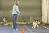 9/17/13: last Beginner Class at Oakland Dog Training Club.