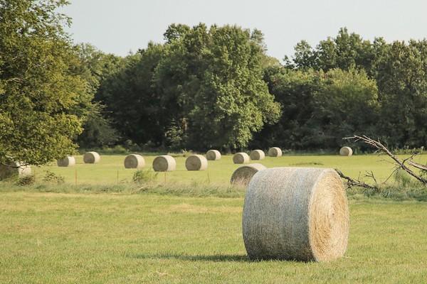 Farm DeLong