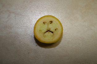 Squash With Mustache