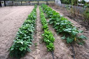 Garden, September 2007
