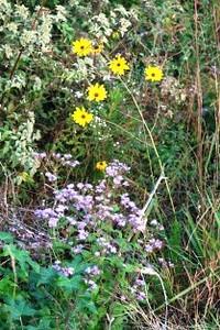 Native Wild Flowers