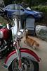 kittys having no part of the bike