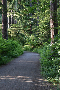 Walking Path in Stanley Park, Vancouver BC on May 30, 2014