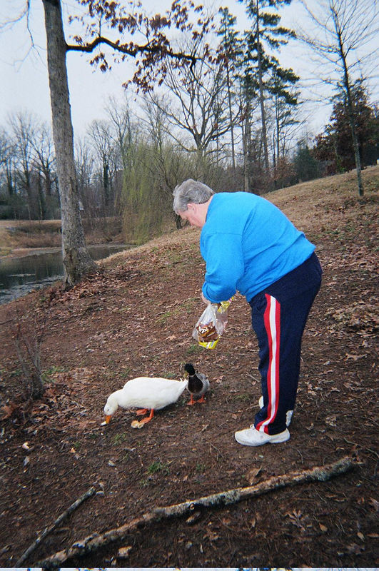 Kiernan stealing food from the hungry ducks