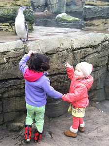 H and Paige check out penguins