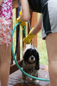 Daisy gets a bath from Bea and Joey!