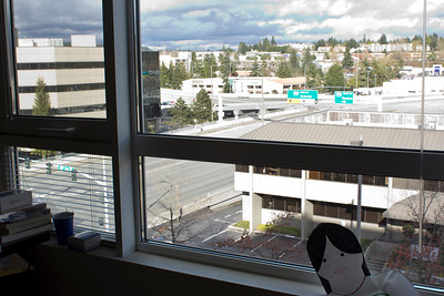 This is the view from the window of my apartment. I live in Bellevue, Washington which is to the east of Seattle.