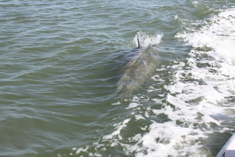 Dolphin!
