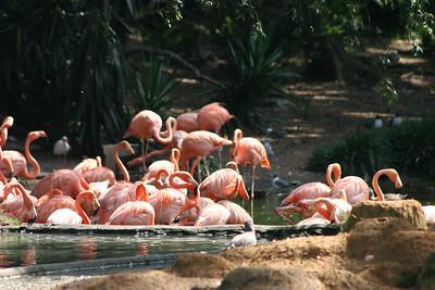05 07 31 Busch Gardens  0015