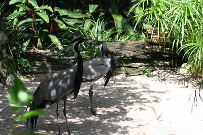05 07 31 Busch Gardens  0010