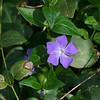 IMG_2217.JPG<br /> flowers