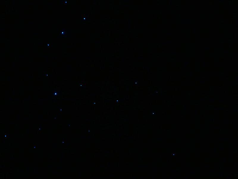 Glow worms, Arthur's Pass