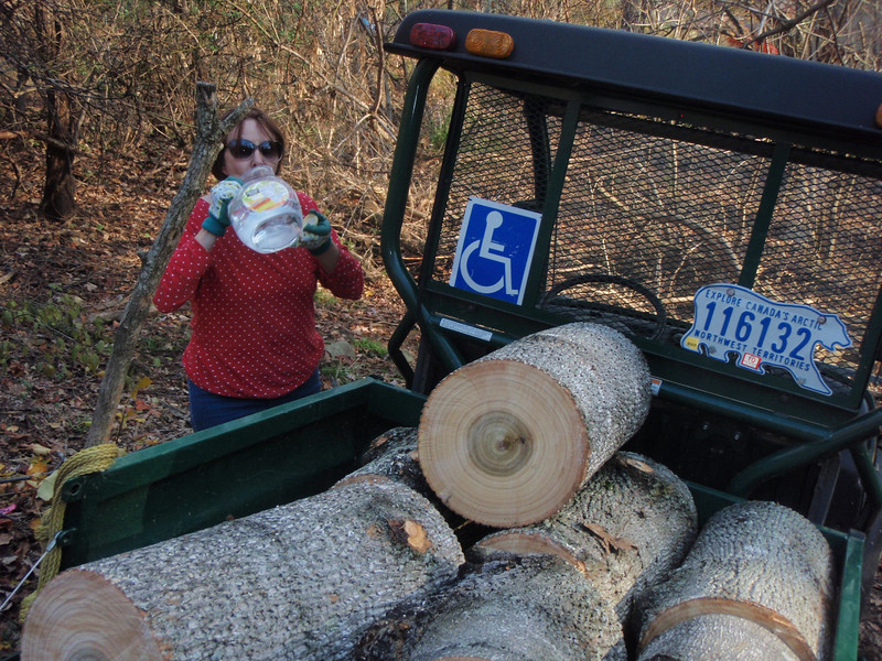 Mule Driver, Pat, water break while hauling poplar logs.
