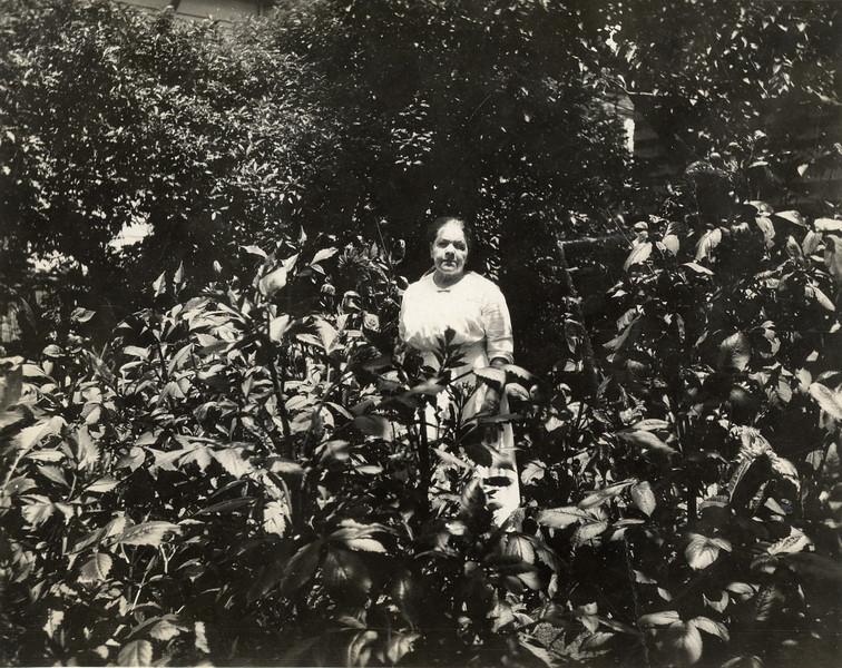 Minnie Rachael Davis Haines (Rose Grandma)