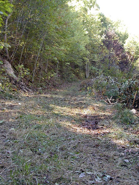 Trail along the base of a seepage cliff<br /> Tallassee TN 9/29/07