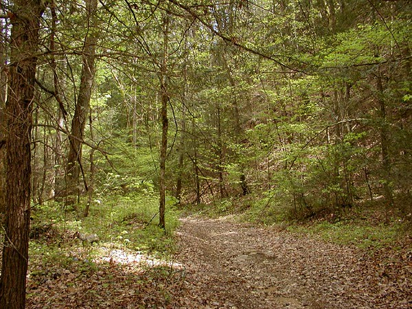 Beautiful forest trail through the woods here on the property.<br /> Tallassee, TN 2008