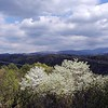 Beautiful view of dogwoods and blue skies toward Chilhowee Lake<br /> Sorry about the power lines!<br /> Tallassee, TN 2008