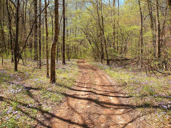 Path through Wildflower Heaven.<br /> Blue phlox everywhere.