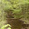 Of of several streams running through the property. It is very pretty. Got some minnows in there.<br /> Tallassee, TN 2008