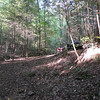 Looking back from Camp Sardine Can at the ATV's on the trail. The forest is beautiful here.