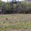Open fields rimmed by trees of Spring green and dogwood blossoms of white!<br /> Tallassee, TN 2008