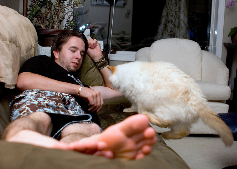 An action shot with my kitty jumping on the couch.