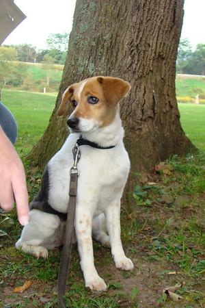 Lascola's Dog
