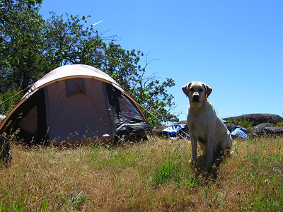 Guarding the Tent