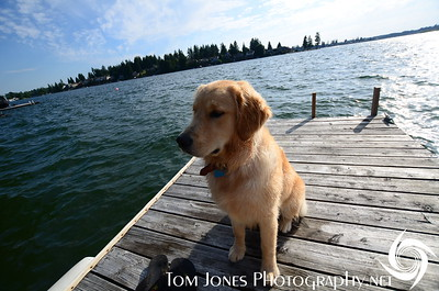 Tucker our 7month old Golden Retriever on Lake Tapps
