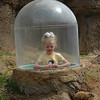 A tunnel allowed children to pop up and look at the prairie dogs as they scampered about.
