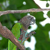 Colorful parrot who lives in the tropical bird house.