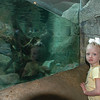 Katie was fascinated by the playful otters.