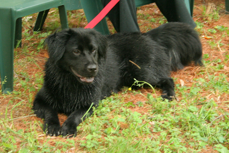 5/11/2008: our new dog Trusty relaxes at Maywood after a romp in the stream, #7016
