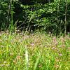 Sea Blush Meadow