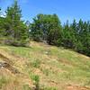 The Garry Oak Meadow