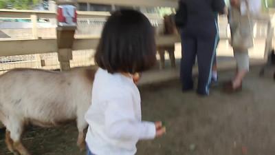 3/2010 - petting zoo