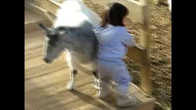 1/2/2010 - petting zoo