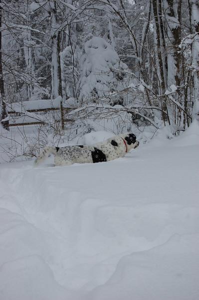 Lucky's cruising . . . snow surfing.