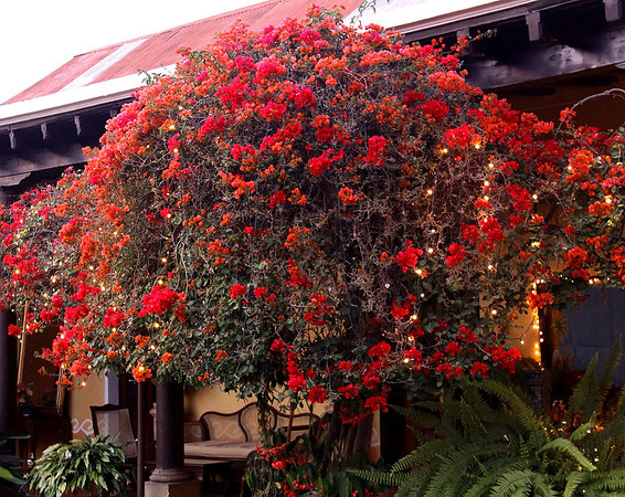Flowers at La Aurora.