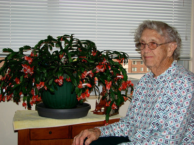 November 11, 2009 - (Gambrill Gardens / Ellisville, Saint Louis County, Missouri) -- Vera with her mother's blossoming Christmas Cactus