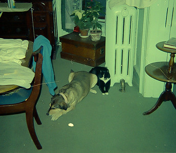 wilma and woodrow dining room