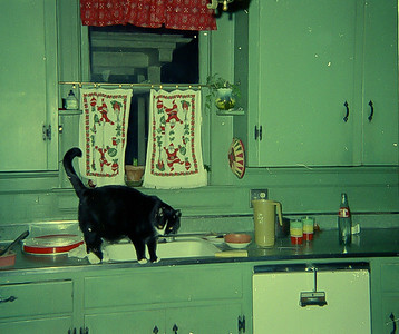 woodrow in kitchen