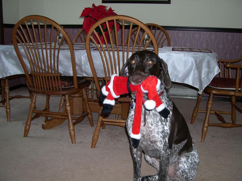 Bad Dog!  No gifts from Santa this year!