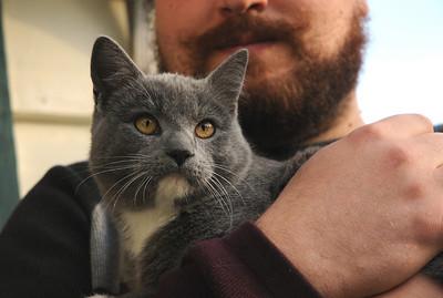 Geoff's New Kitties