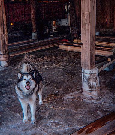 Buddy in the old barn at grandpas farm.