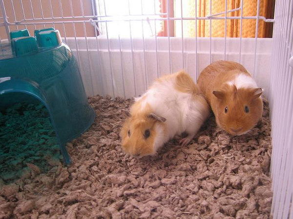 "These are ""our girls""...Norbie is on the left and Ginger is on the right...."