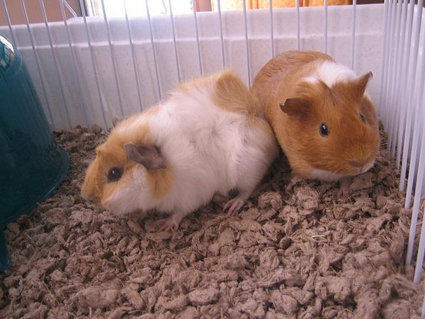 Norbie and Ginger hanging out in their home!