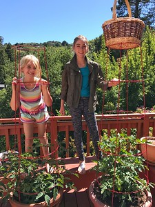 Two tomato plants and two girls are thriving!