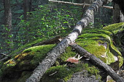 Dead Fall and Moss,