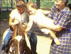 JoLynn Goecks on her Shetland pony, Buttons. She's trying to get Holly Sue to pet the pony, and Martha has her hands full!